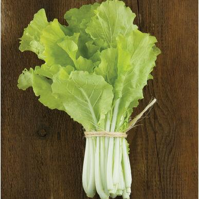 Tokyo Bekana Chinese Cabbage