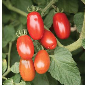 情人节葡萄西红柿