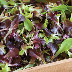 Wildfire Lettuce Mix Lettuce Mixes