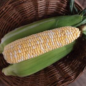 Natural Sweet Sweet Corn