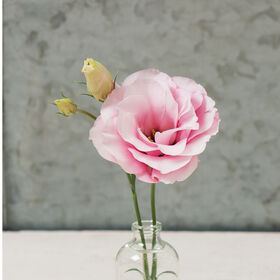 Mariachi Pink