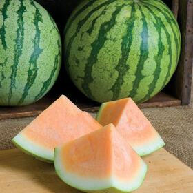 橙色的三倍体西瓜(无籽)