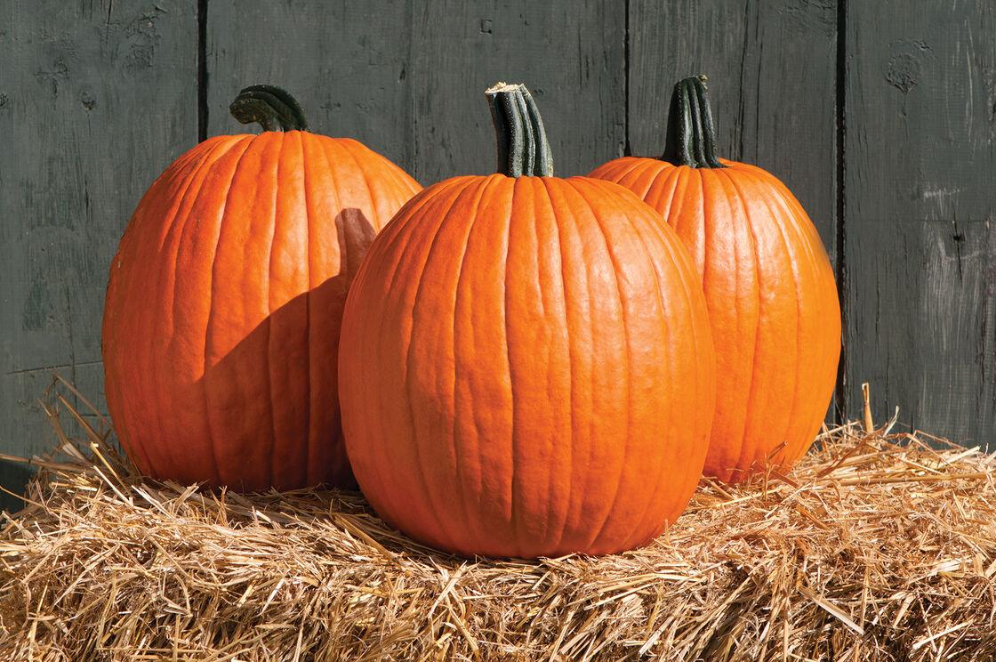 Znalezione obrazy dla zapytania pumpkin