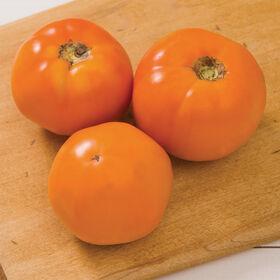 厨师的选择橙色专业西红柿