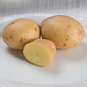 育空金马铃薯