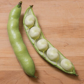 Vroma Fava Beans