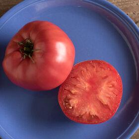 白兰地酒祖传番茄