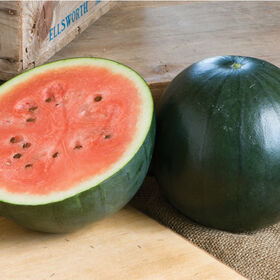 Sugar Baby Diploid Watermelons
