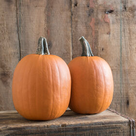 Darling Specialty Pumpkins