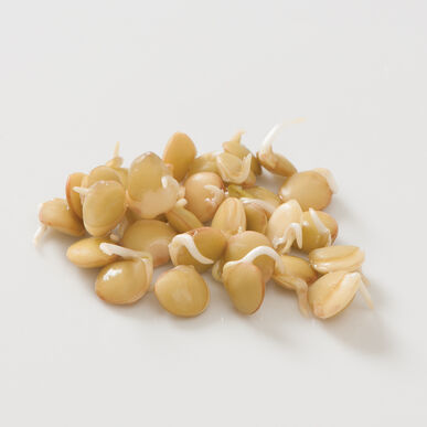 Large Green Lentil Sprouts