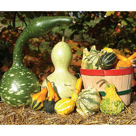 Gourd Collection