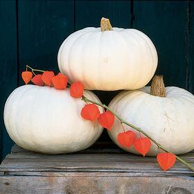 Valenciano Specialty Pumpkins