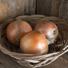 Cortland Full-Size Onions