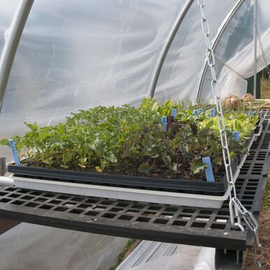 Seedling and Microgreens Bench - 2' W x 4' L