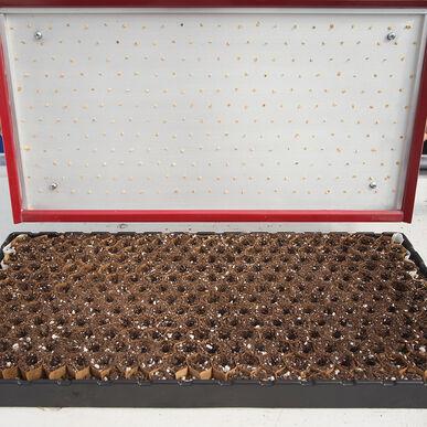 Seed Plate B264 Vacuum