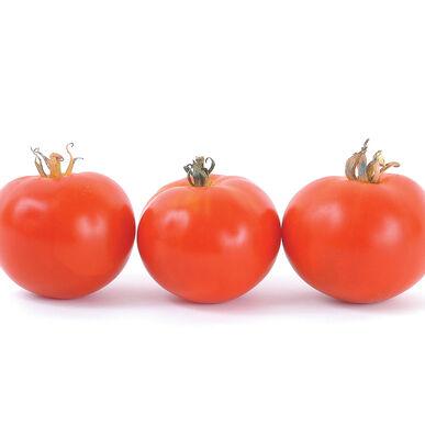 Oregon Spring Slicing Tomatoes