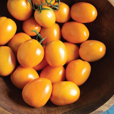 Sunrise Sauce Paste Tomatoes