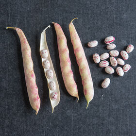 Tongue Of Fire Fresh Shell Beans