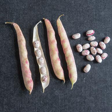 Tongue Of Fire Fresh Shell Beans