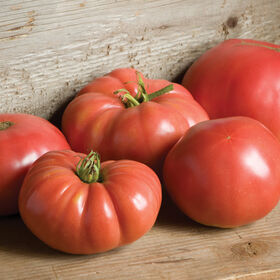 German Johnson Heirloom Tomatoes
