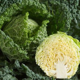 Alcosa Fresh Market Cabbage