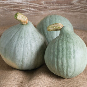 Blue Ballet Winter Squash