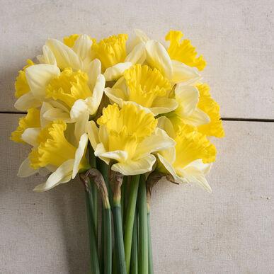Bravoure Narcissus