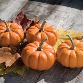 Munchkin Specialty Pumpkins
