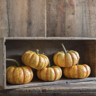 Spark Specialty Pumpkins