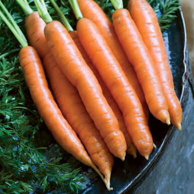 Nelson Early Carrots