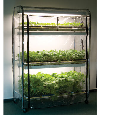 Full-Size Seedling Light Cart – 12 Trays, 384 Watts Grow Lights and Carts