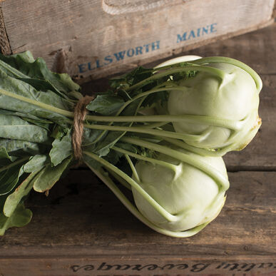 Korist Fresh Eating Kohlrabi