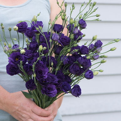 Doublini Blue - Pelleted (F1) Lisianthus Seed | Johnny's ...