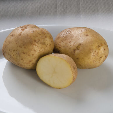 Kennebec Potatoes