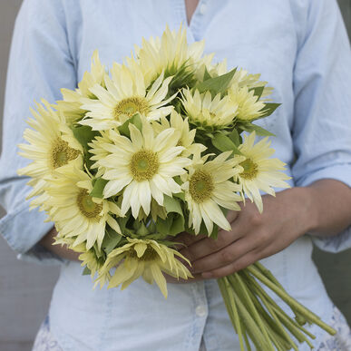 Jade Tall Sunflowers