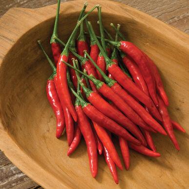 Bangkok Hot Peppers