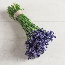 Ellagance Purple Lavender