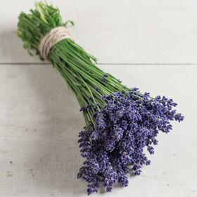 Ellagance紫色的薰衣草