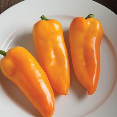 Cornito黄色甜椒