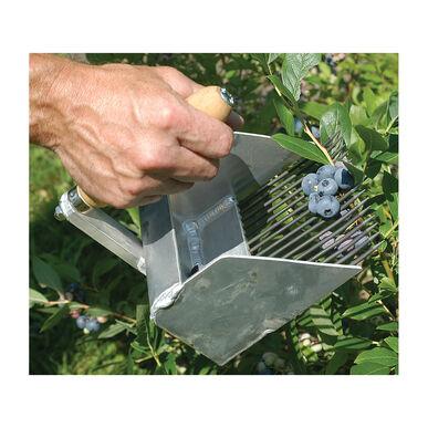 Highbush Blueberry Rake Harvesting Tools