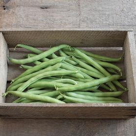 Provider Bush Beans