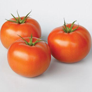 Frederik Beefsteak Tomatoes