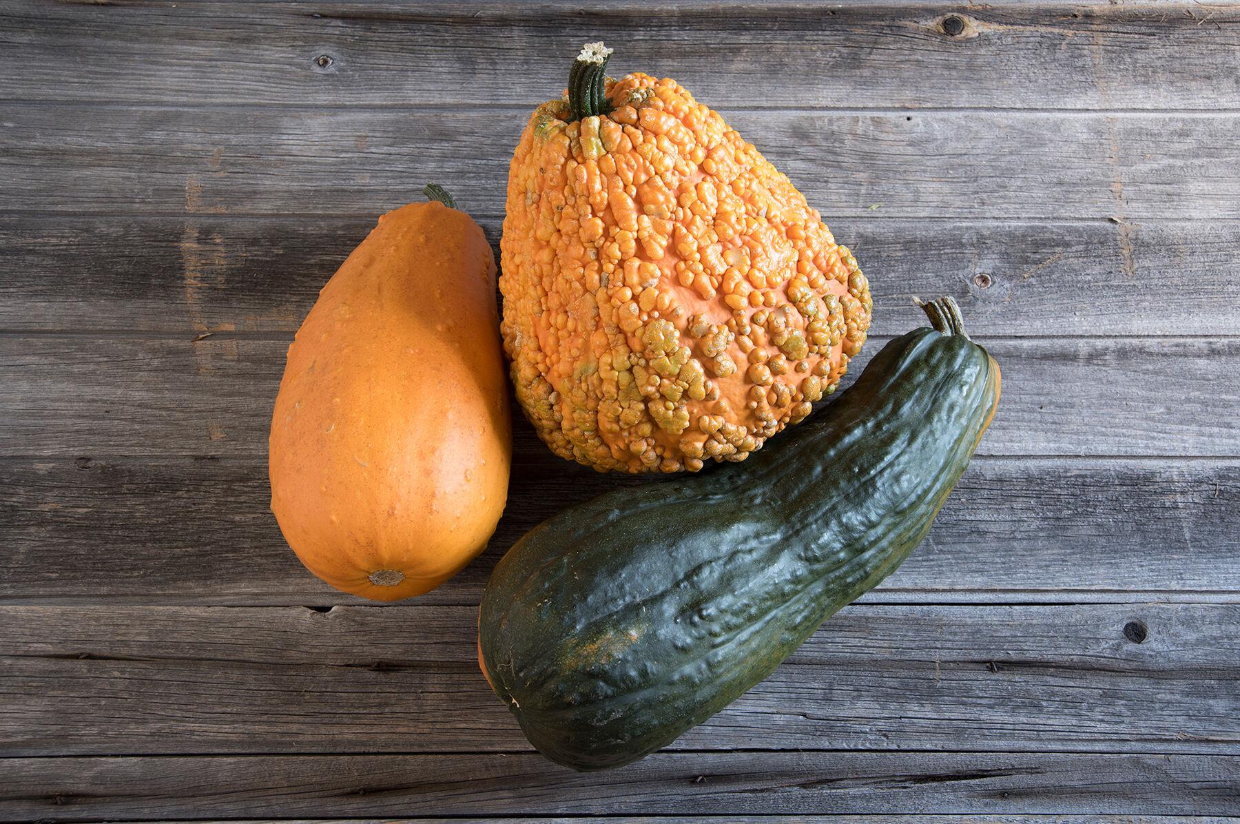 Gourds die before mature