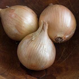 Ailsa Craig Exhibition Onion Plants