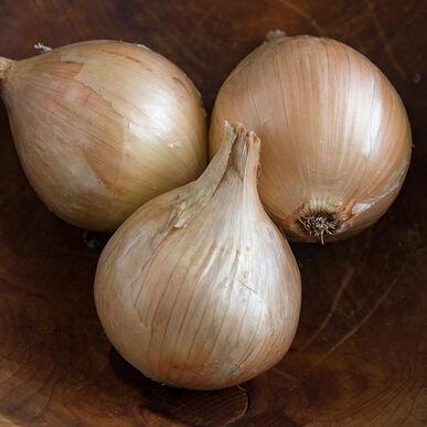 Ailsa Craig Exhibition Full-Size Onions