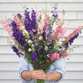约翰尼的崇高公式组合燕草属植物