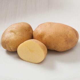 萨蒂娜马铃薯