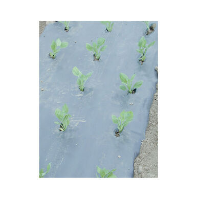 Solar Mulch – 4' x 50' Solid Plastic (Polyethylene) Mulch