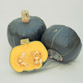 Buttercup (Burgess Strain) Winter Squash