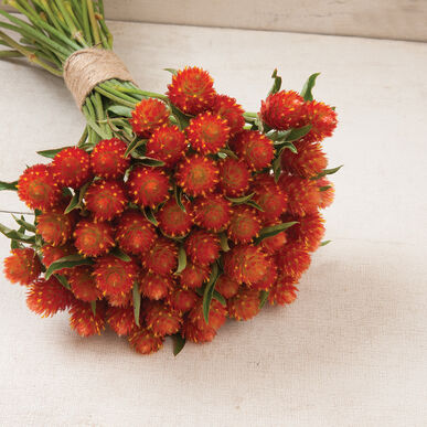 QIS(TM) Orange